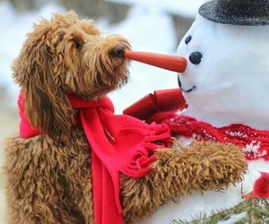 dog, snow, and snowman image