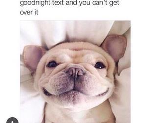 bae, dog, and lol image