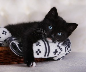adorable, cat, and black image