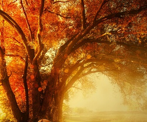 autumn, deer, and nature image