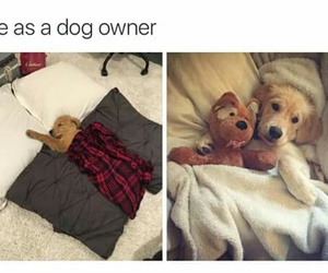dog, puppy, and owner image