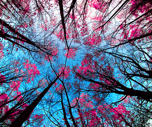 beautiful, trees, and blue image