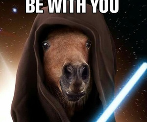 funny, horses, and star wars image