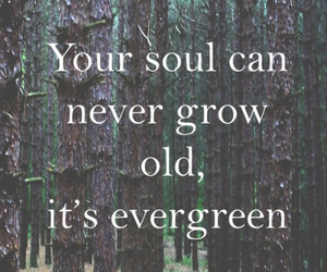 quote, ed sheeran, and soul image