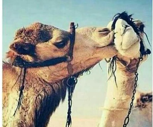 camel, kiss, and loveit image