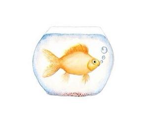 fish, fishbowl, and water image