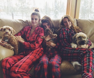 taylor hill and dogs image