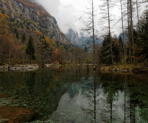 autumn, foliage, and italy image