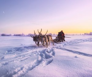 reindeer, russia, and snow image