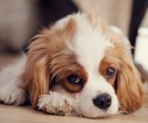 animals and cute dog image