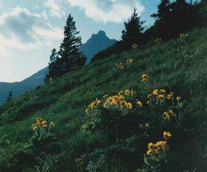 flowers, nature, and travel image