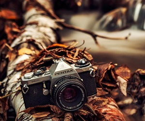 camera, autumn, and photography image