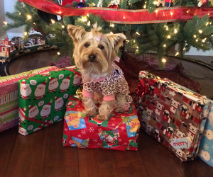 dog, present, and christmas image
