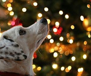 christmas, dog, and light image