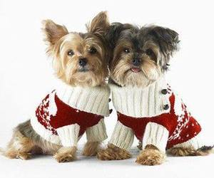 baby animals, christmas, and cute animals image