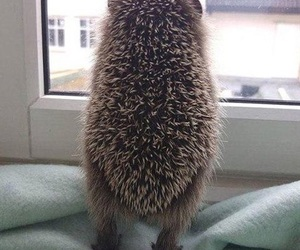 hedgehog, animal, and window image