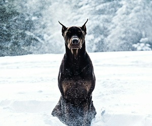 dog, agressive, and snow image