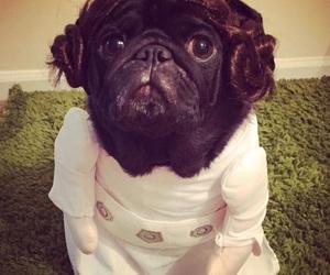 cosplay, costume, and dog image
