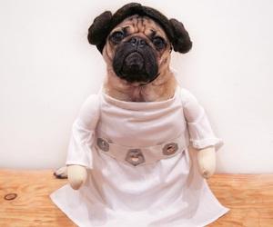 pug, star wars, and dog image