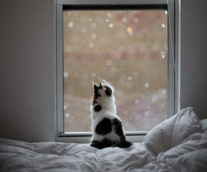 cat, snow, and window image