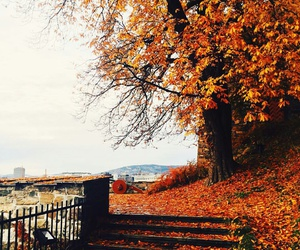 autumn, oslo, and view image