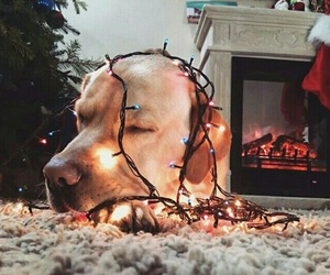 christmas, dog, and fireplace image