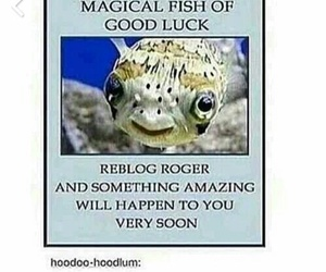 luck, roger, and fish image
