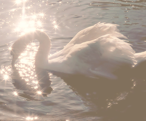beauty, sunlight, and Swan image