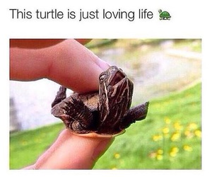 turtle, happy, and life image