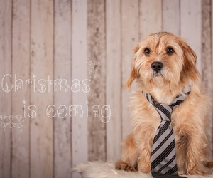 weihnachten and dogs? christmas image