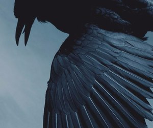crow, ravenclaw, and black image
