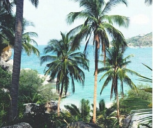 palms, summer, and vacation image