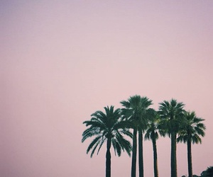 palm trees, beach, and palms image