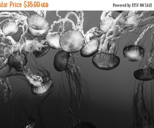 etsy, large wall art, and national geographic image