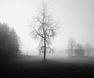 blackandwhite, fog, and walking image