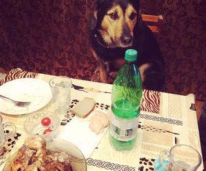 dog, dogs, and table party image