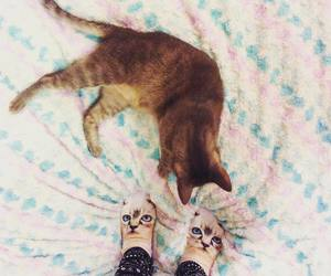 cat, cats, and legs image