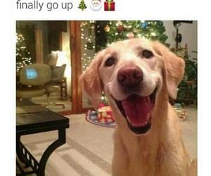 dog christmas winter face image