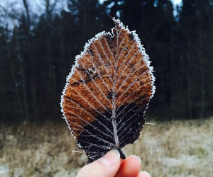 cold, detail, and leaf image
