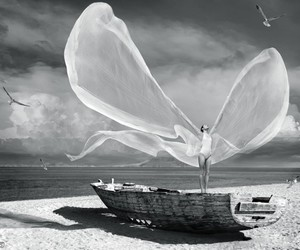 wings, sea, and beach image