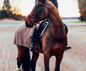 equestrian, field, and horse image