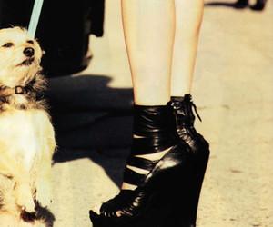 dog, fashion, and shoes image