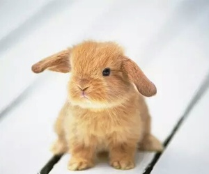animals, rabbit, and cute image