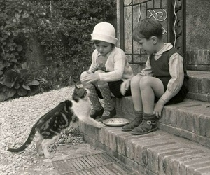 1920, cute, and cat image