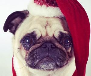 dog, christmas, and pug image