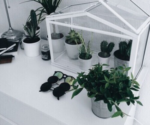 plants, green, and grunge image