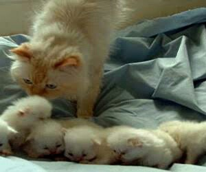 cats, kittens, and kitties image
