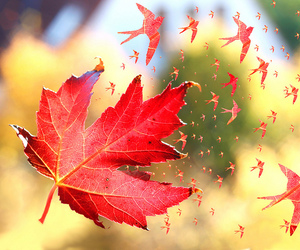 autumn, leaves, and bird image
