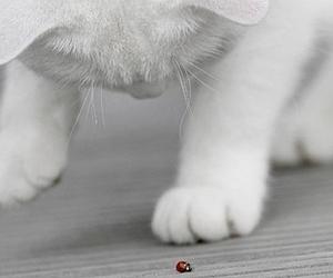 cat, ladybug, and white image