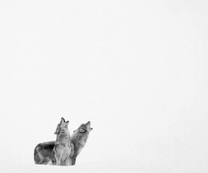 wolf, animals, and pretty image